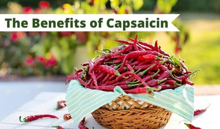 capsaicin cover photo