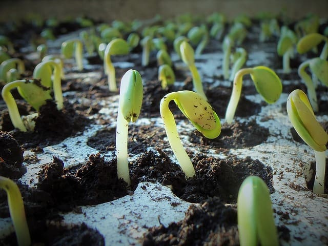 plants sprouting