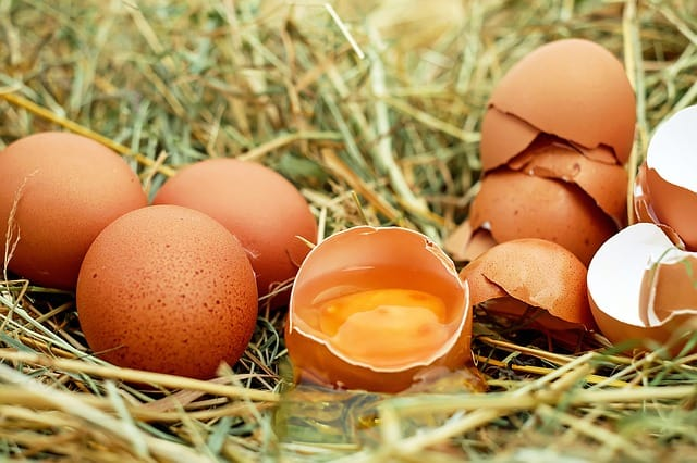 brown eggs in grass