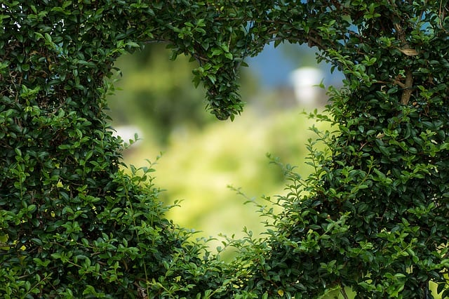 bushes in heart shape