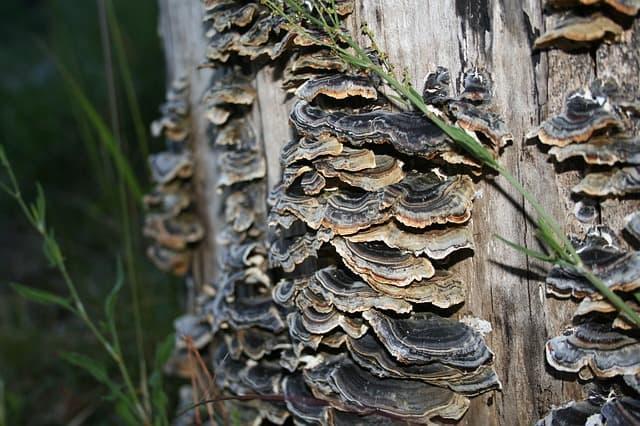 mushrooms on tree