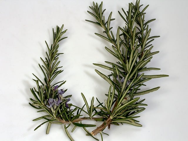 rosemary branches and flower